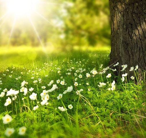 spring-276014__480
